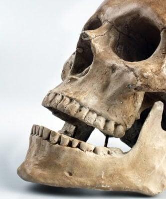 anatomy bone cranium
